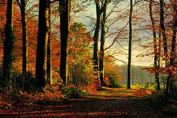 Herbst im Spanderswoud von Annie Snel