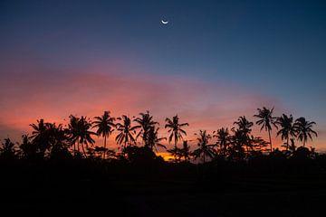 Zonsondergang met palmbomen van Ellis Peeters