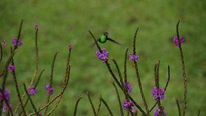 Kolibri van
