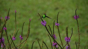 Kolibri von Saskia Annerie