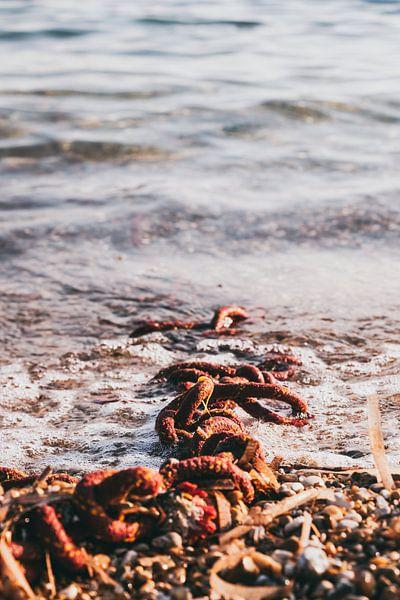 Touw in de zee van Jessie Jansen