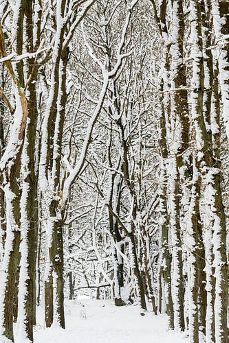 Winterse bomen