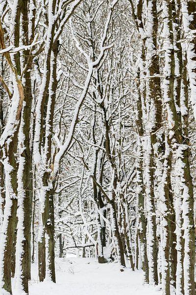 Winterse bomen van Richard Guijt