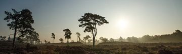 Leuvenumse Bossen savanne landschap van