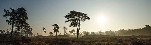 Leuvenumse Bossen savanne landschap