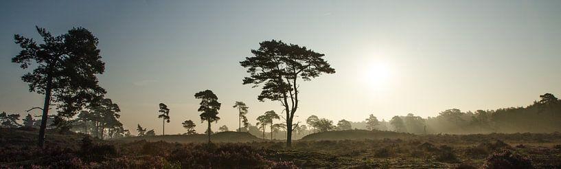 Leuvenumse Bossen savanne landschap van Maurice Verschuur