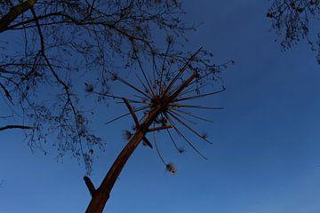 Blue sky van Rob Klaucke