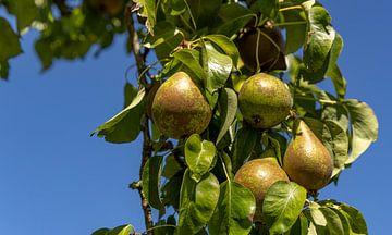Close-up perenboom van Percy's fotografie