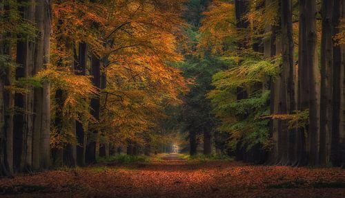Autumn Fairytale van