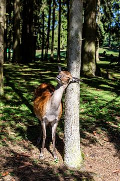 Wozu sind Bäume gut von Harald Schottner