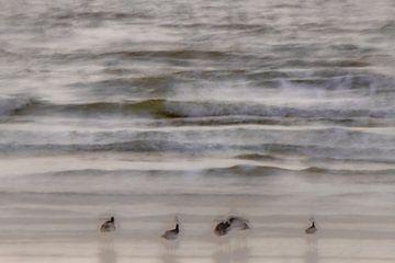 Impressie van de kust van jowan iven