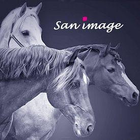 san image avatar