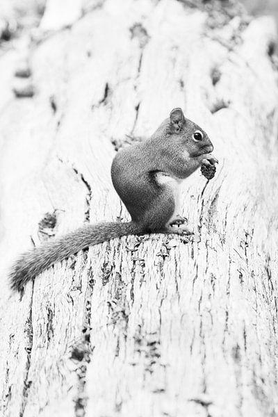 Yellowstone eekhoorn van Antine van der Zijden