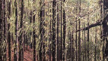 aufgeforsteter Wald von t.a.m. postma