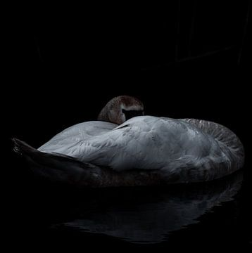 Slapende schoonheid van Marjon Boerman