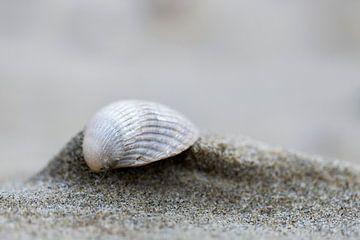 Schelp op het strand van Everydayapicture_byGerard  Texel