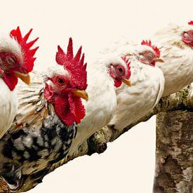 Met de kippen op stok! van Jessica Berendsen