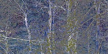 Wald von tausend und einer Nacht von Hanneke Luit