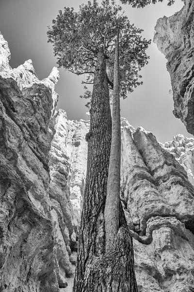 Bryce Canyon National Park sur Loek van de Loo