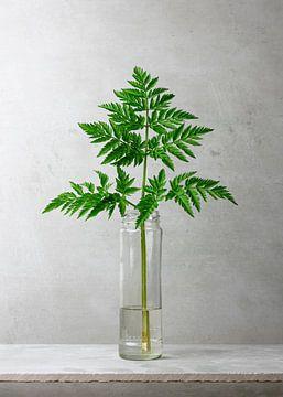 Botanisch groen in een vaas