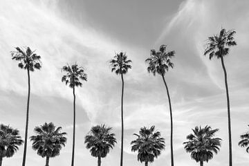 Palmbomen aan de kust van La Jolla, Californië van Melanie Viola