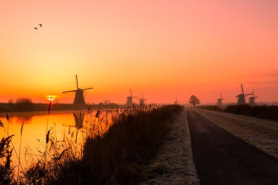 Good Morning Kinderdijk van Cho Tang