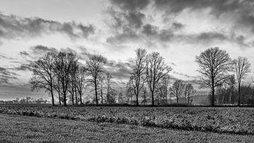 Ländliche Landschaft mit Feld, Reihe von Bäumen und Sonnenuntergang von Tony Vingerhoets