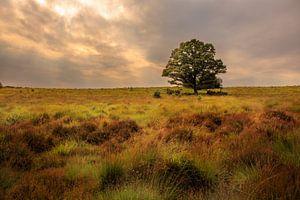 Eenzame boom in landschap, Lonely tree in landscape