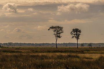 Parc national de Dwingelderveld
