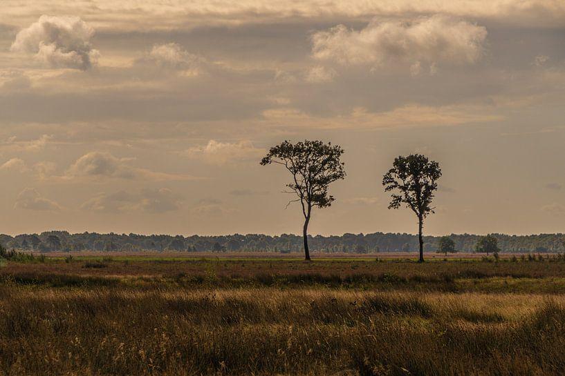 Nationaal Park Dwingelderveld van Ingrid Aanen