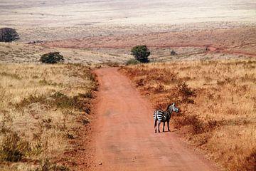 Zebra in Ngorongoro NP in Tanzania  von Tineke Mols