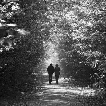 Wandeling in het bos van