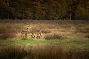 Familie Rehwild im Wald von Susan van Etten