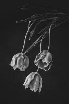 Französisch Tulpen 2 von Zus en Zo Foto