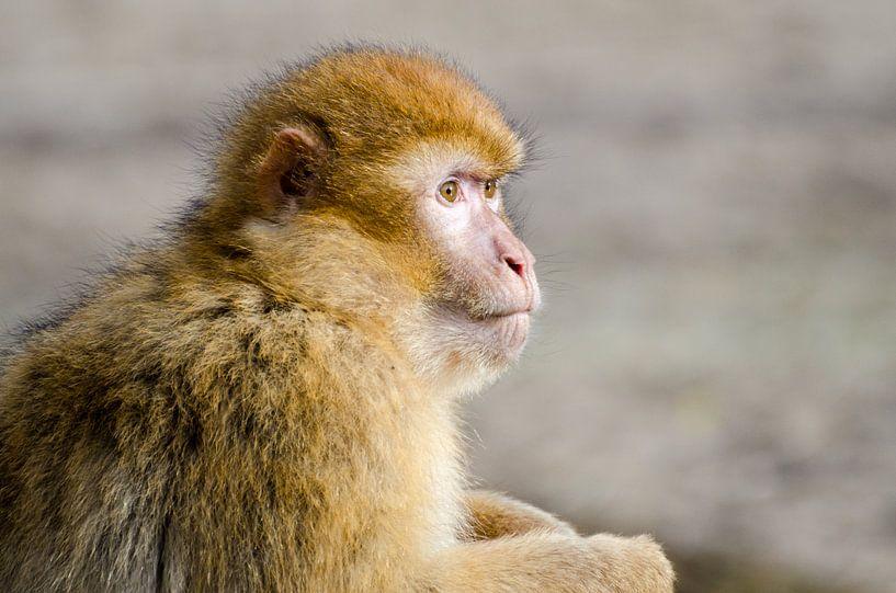 Portret van een aap van Mark Bolijn