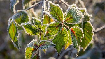 Groene bladeren met een randje vorst van Michel Seelen