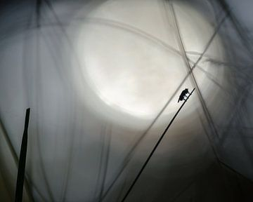 Vlieg silhouet von Bernadette Soemers