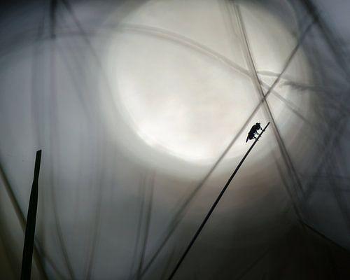 Vlieg silhouet