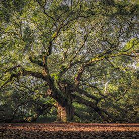 The Angel Oak van Edwin Mooijaart