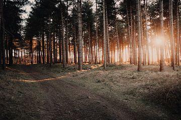 Oranjezon winterse zonsondergang van Andy Troy