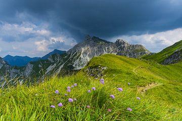 Alpenbloemen, Allgäuer Alpen van
