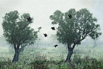 Krähen im Nebel, S. Amer von 1x