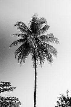 Kokosnuss Palme sur MR OPPX