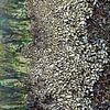 abstracte kunst van moeder natuur, mosselen  op een baken van Hanneke Luit thumbnail