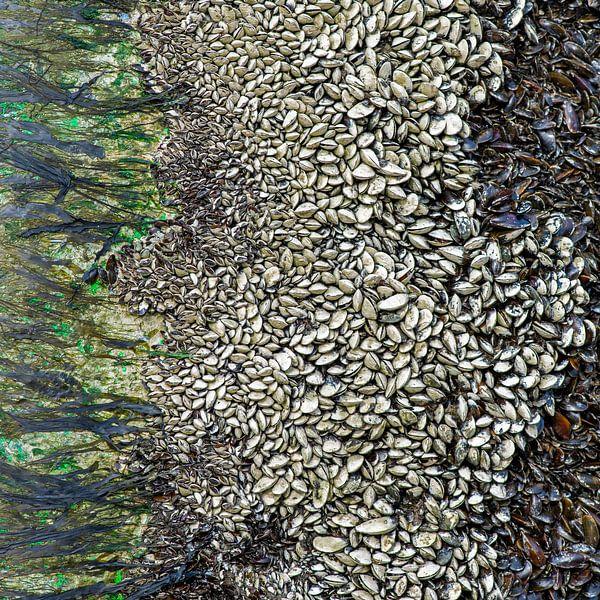 abstracte kunst van moeder natuur, mosselen  op een baken van Hanneke Luit