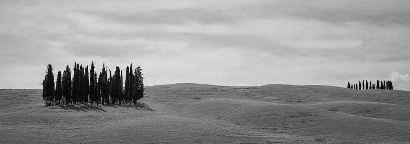 Monochrome Tuscany in 6x17 format, Cipressi di San Quirico d'Orcia van Teun Ruijters