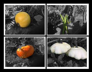 BIOlogische groenten van Christophe DB