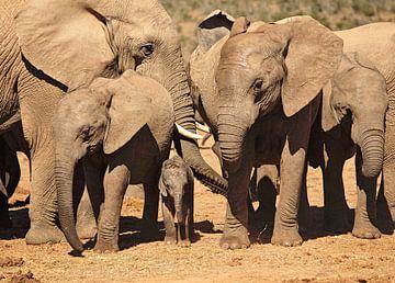 Elefant mit Baby von Nicole Jagerman