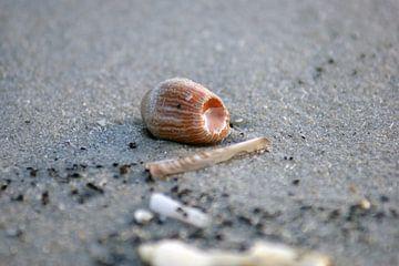 Zee anemoon von Jeroen van Deel