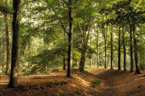 Achter de bomen is het licht. van